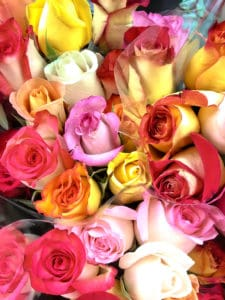 top view of yellow, red and pink roses